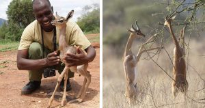 Este asombroso animal vive toda su vida sin beber agua
