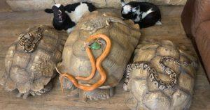 Mujer lleva animales del santuario a su casa para sobrevivir a tormenta invernal