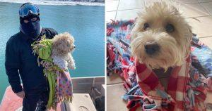 Perrito atrapado río 4 dias adoptado salvador