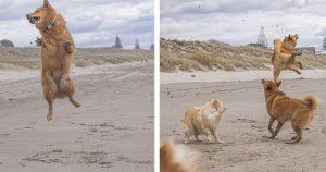 Perro ama tanto la playa que no puede dejar de saltar de alegría