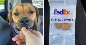 Conductor de FedEx sorprende a un perro con una entrega especial solo para él