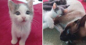 Gatito estaba solo gata acepta familia