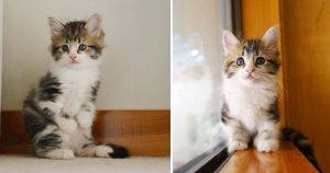 Gatito que se para como un canguro está decidido a prosperar y vivir la mejor vida