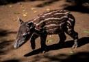 Liberan especies en peligro de extinción en reserva natural privada de Nicaragua