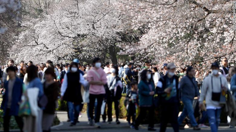 Japón registra la floración de cerezos más temprana en 1.200 años. Científicos advierten que es una señal de una crisis climática mayor thumbnail