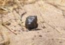 Estos meteoritos aterrizaron en la Tierra tras un viaje de 22 millones de años