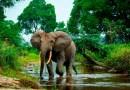 Solo el 3% de los ecosistemas terrestres del mundo permanecen intactos, según un estudio