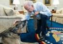Familia Biden anuncia la muerte de su «amado» pastor alemán