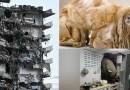 Los videos más impactantes de la semana: del edificio que se derrumbó en Miami al perro que cargaba con kilos de pelo y parecía otra criatura