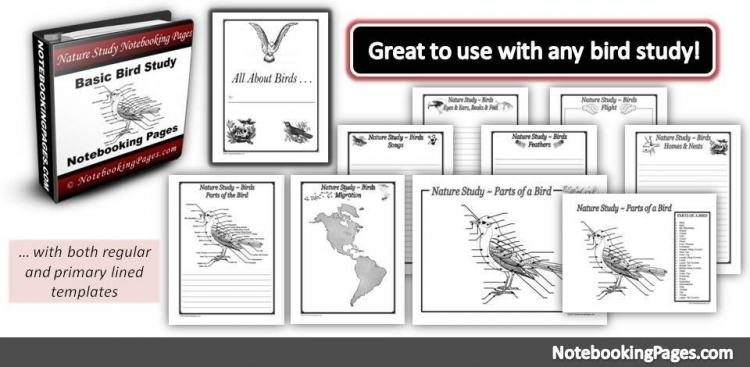 All About Birds Basic Study Notebooking Pages