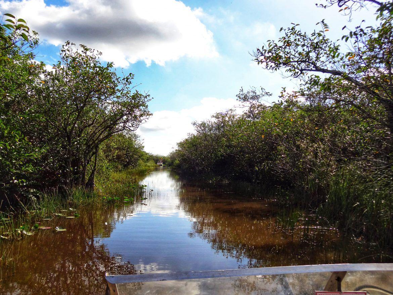 Viajar a Miami. Everglades