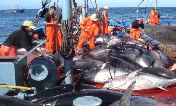 Accord de pêche Maroc-UE : une «violation directe de la souveraineté du peuple sahraoui» | Sahara Press Service
