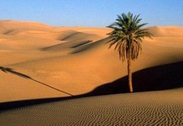 Un grupo de jóvenes activistas saharauis visitará Madrid para denunciar las vulneraciones de Derechos Humanos en el Sáhara Occidental | Espacios Europeos