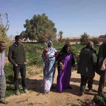 Minister of Economic Development observes agricultural harvest in Wilaya of Smara | Sahara Press Service