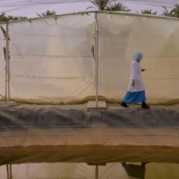 'Solo son peces', la historia de una piscifactoría en el Sahara nominada a los Goya – CuartoPoder