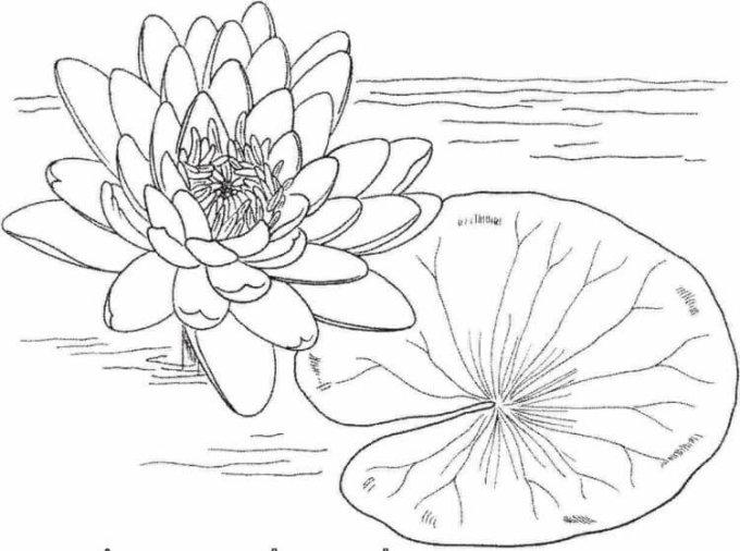 15 Gambar Sketsa Bunga Dari Pensil Yang Mudah Dibuat