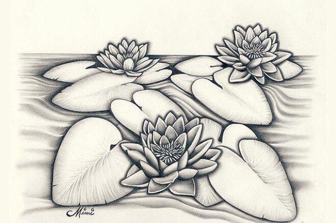 Goresan Sketsa Bunga Teratai