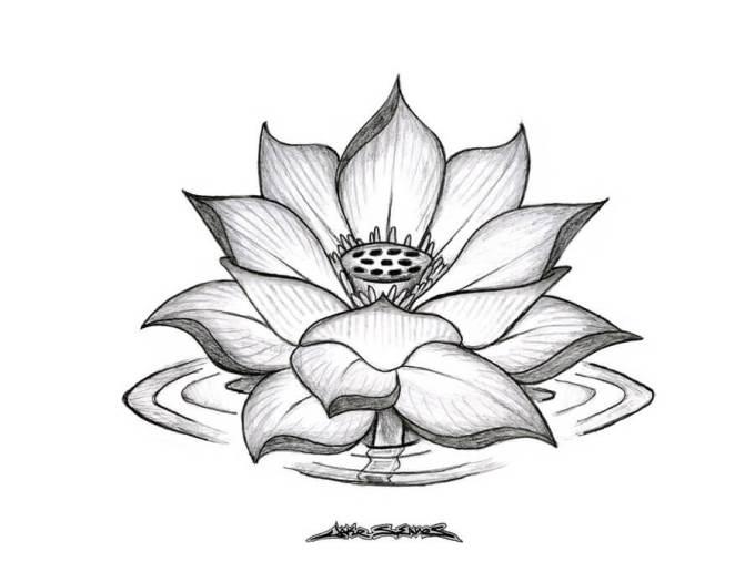 Sketsa Bunga Teratai Dengan Pencil