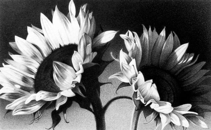 gambar sketsa matahari dengan pensil