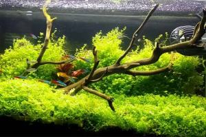 cara membuat aquascape yang murah