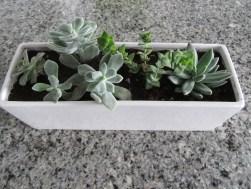plant-succulents