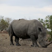 World Rhino Day – 22 September 2016