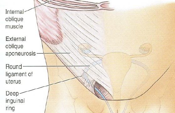 inguinal canal of female