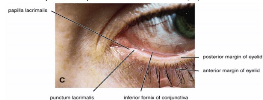 Read more about the article The eye (Human anatomy)-Orbit-eyeball-NotesMed.com