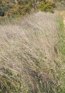 dead grass on Thyme Track 28-1-15