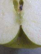 apple, halved