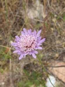 pink-wildflower