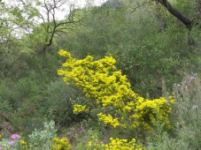 wildflowers-yellow2