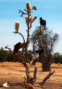 who to call for help if goats get in your trees