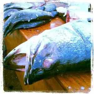 Lake Victoria fresh fish at Kabusu roundabaout, Kampala, Uganda (2012-05)