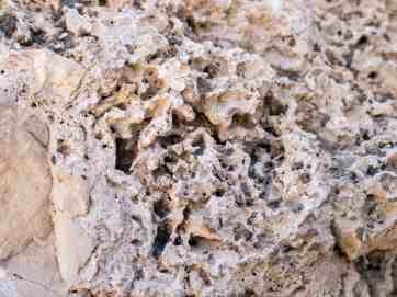 Porous rock at Ein Gedi Nature Reserve,, Israel (2017-01-04)