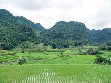 Karstic mountains & rice fields in Northern Vietnam (2017-07)