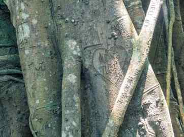 Carving in Heritage Banyan Tree, Monkey Peak, Da Nang, Vietnam (2017-06)