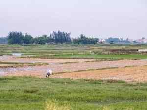 Farmer on a rice field, Hoi An, Vietnam (2017-05/06)