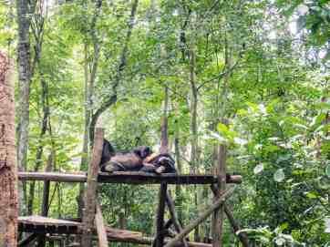 Lounging at the Free the Bears Sanctuary, Kuang Si, Luang Prabang, Laos (2017-08)
