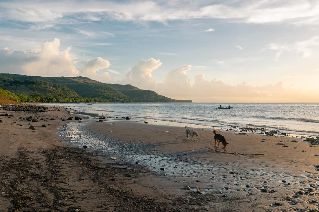 Beloi beach with dogs, Atauro, East Timor