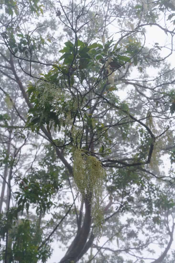 Cloud forest, Mt. Ramelau, East Timor