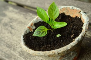 What Are The Essential Features of Growing Good Garden Plants
