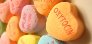 What Is Oxytocin:The Hormone of Love And Happiness