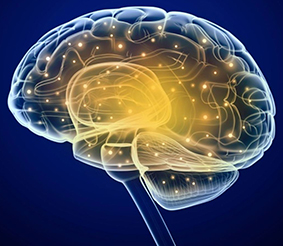 What Are Neuropeptides;5 Facts You Must Know