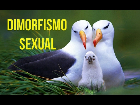 What Is Sexual Dimorphism In Animals.