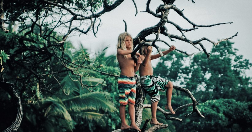Jungle-Groms-gotoddrun
