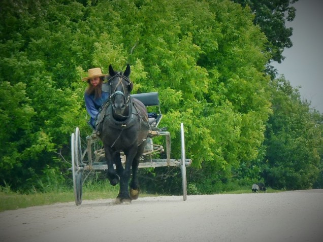 Amish tour in  Harmony, Minnesota,