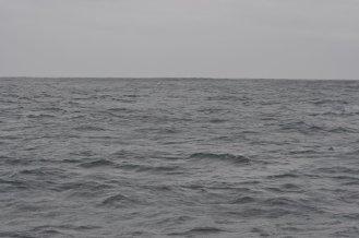 Kaikoura, rough seas, no whales