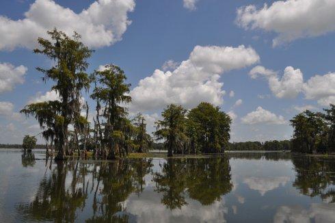 cajun swamp tour 10