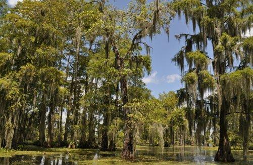 cajun swamp tour 9